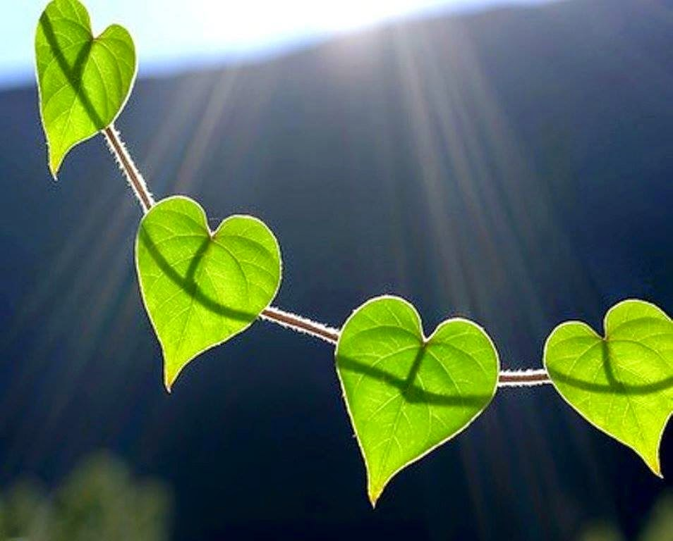 very_cute_hearts_shapes